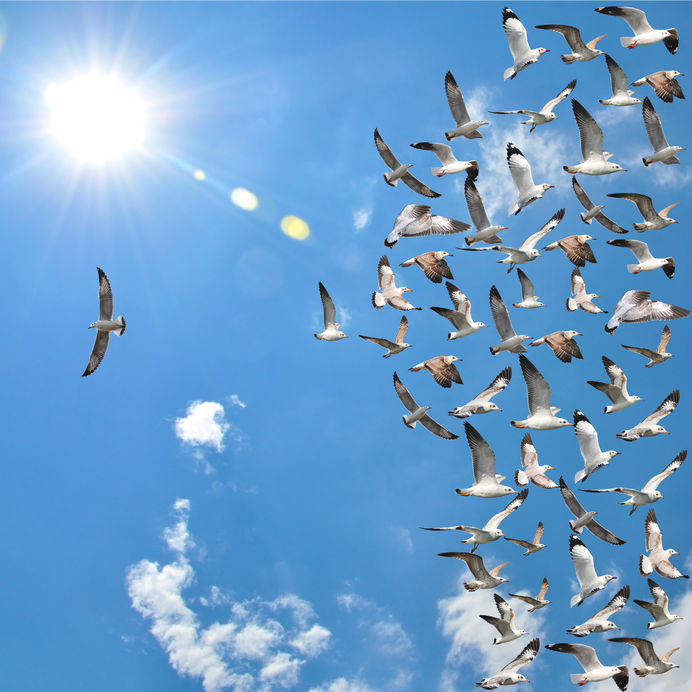 bird-flying-away-from-flock