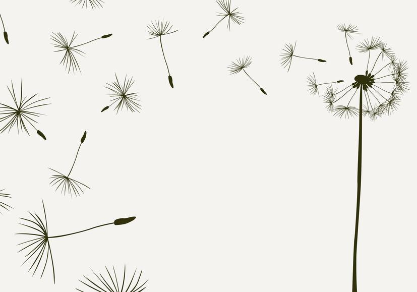 blowing-dandelion