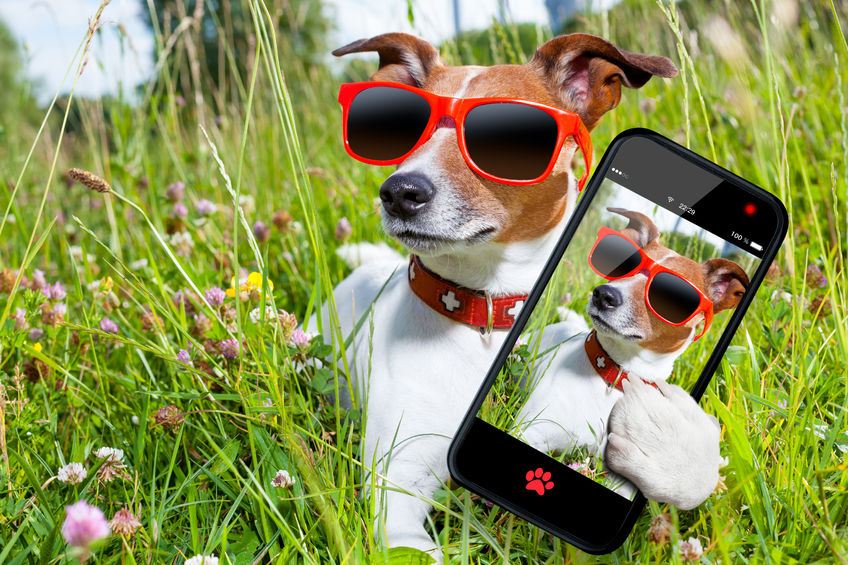 dog-with-glasses-and-smartphone-Noah Fleming