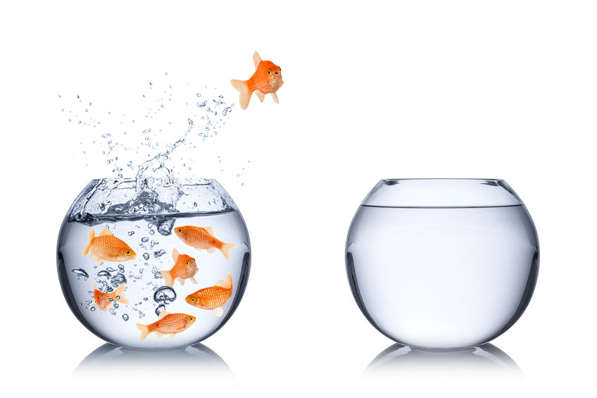 goldfish-courage-leadership