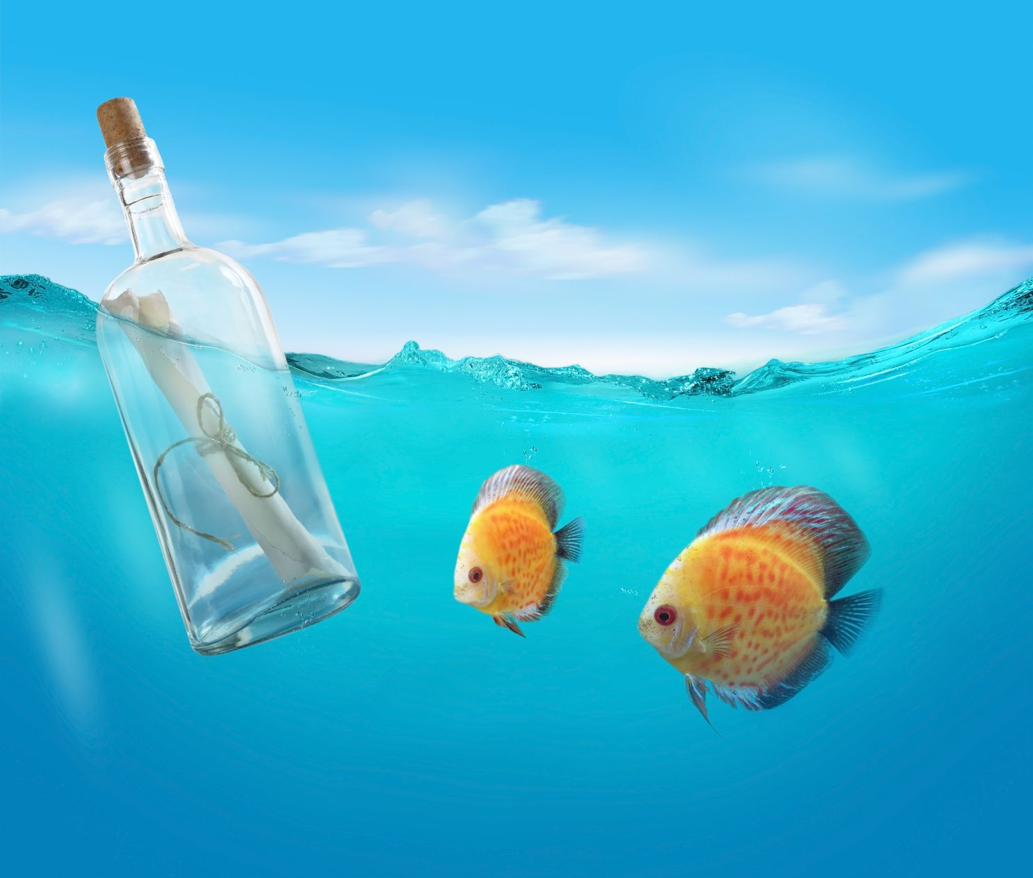 message-in-bottle
