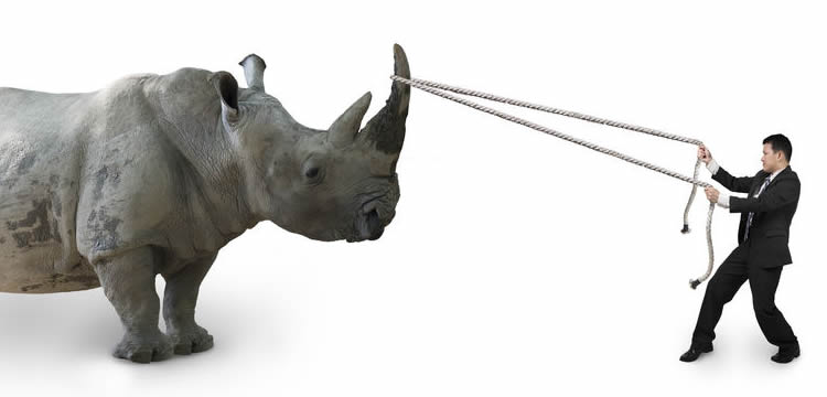 Perfect Pitch Gray Rhino Proof Your Business
