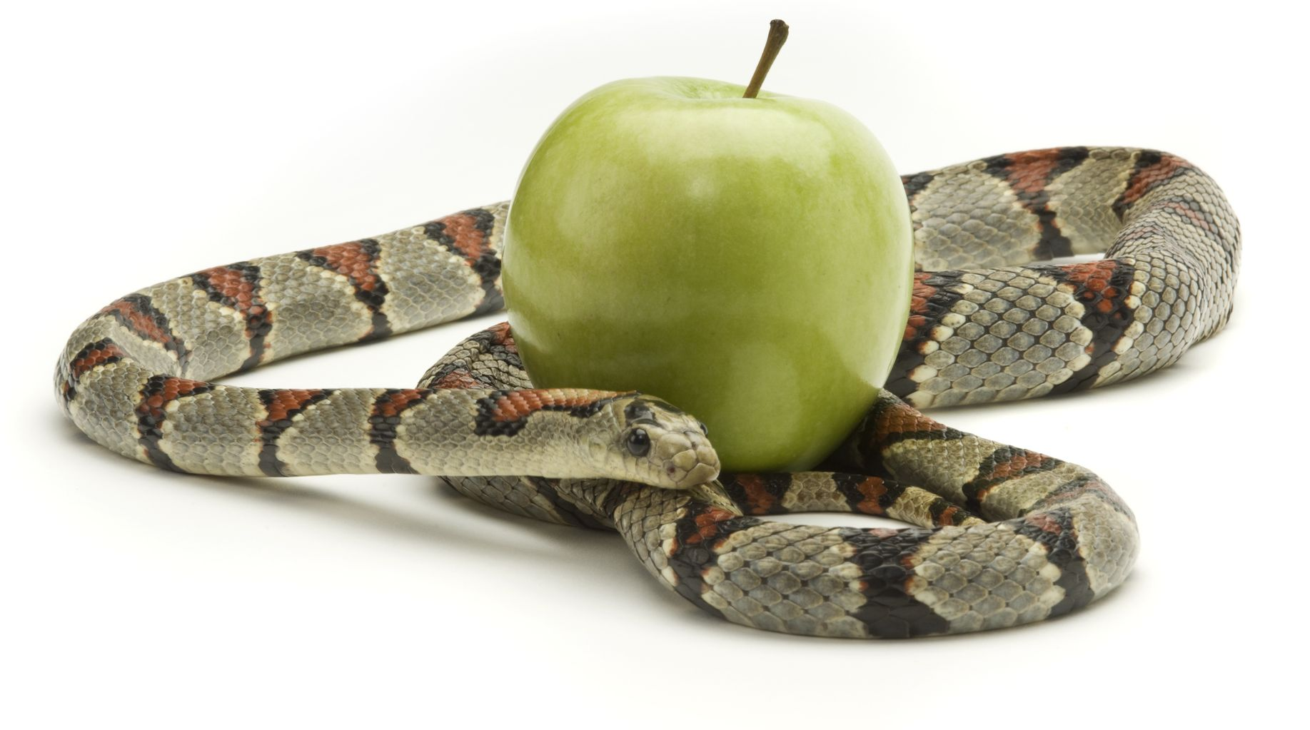 snake-with-apple
